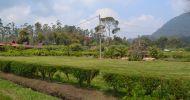 Ingin Sewa Untuk Rombongan dari Caruban Penginapan Terjangkau di Ciwidey Bandung Selatan