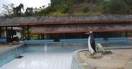 Ingin Booking Untuk Rombongan dari Surabaya Hotel atau Penginapan Murah Banget di Ciwidey
